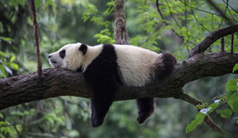 Visa World Card Panda mogelijkheden