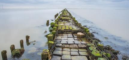 WNF Noordzee Herstelproject